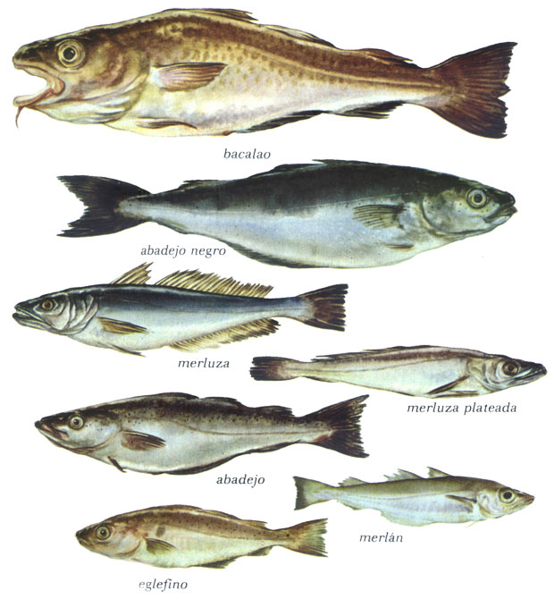 Cocina pescados for Variedad de peces