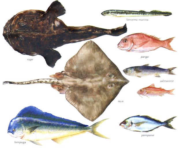 Pescados de mar imagui for Variedad de peces
