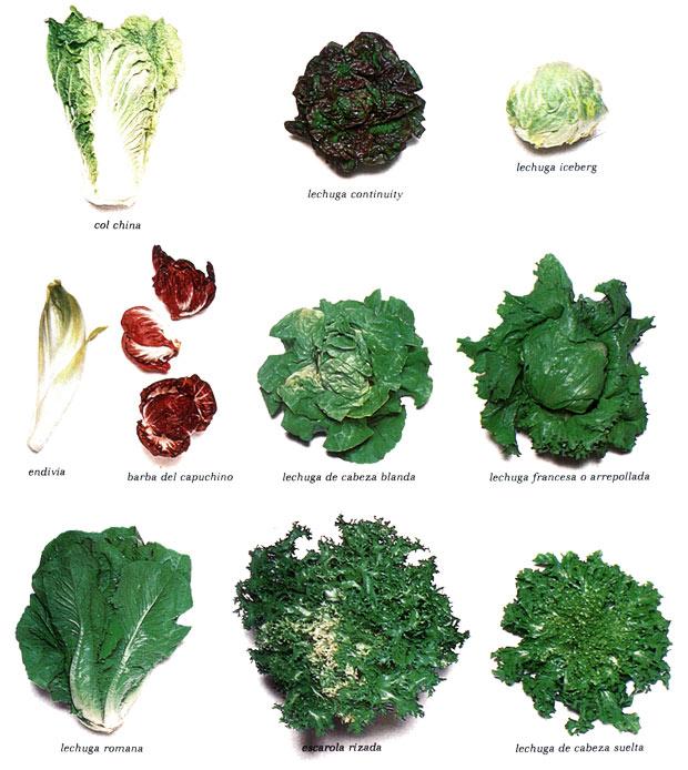 La lechuga y ensaladas for Plantas hortalizas ejemplos
